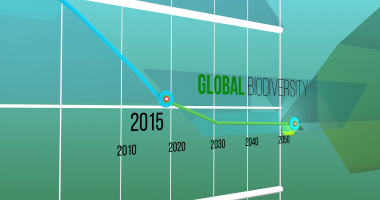 Global biodiversity graph