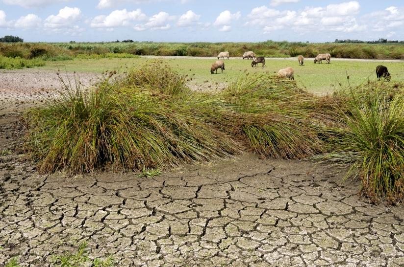 Foto van een verdroogd landschap