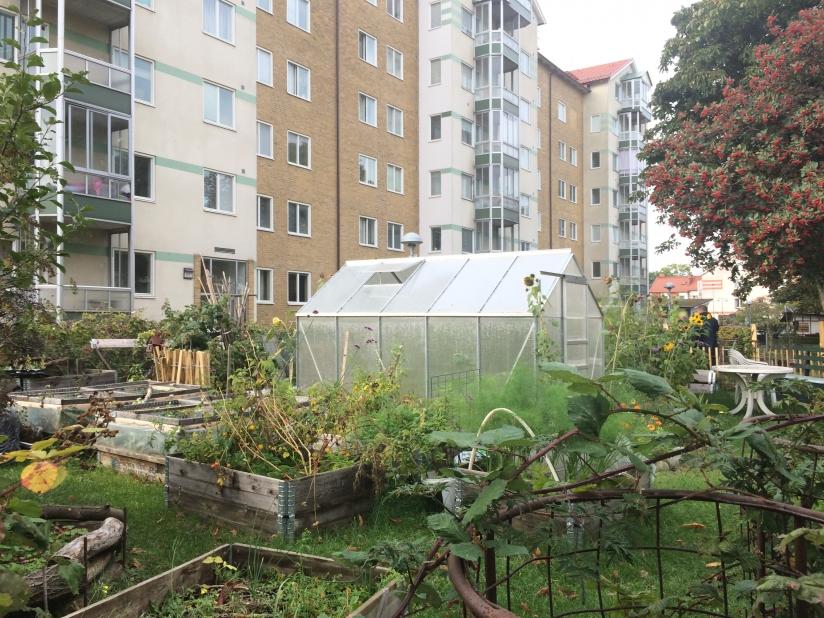 Photo Urban gardening in Malmö, Sweden