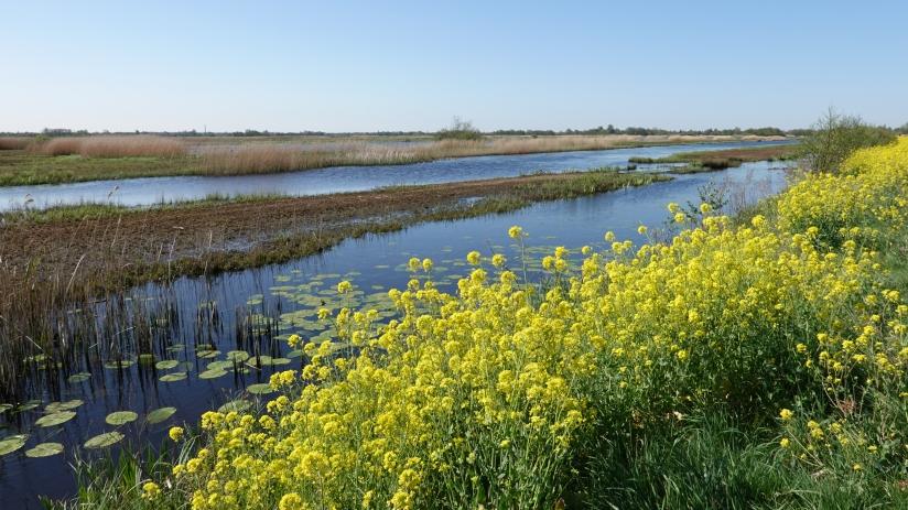 Natuurgebied de Westbroekse Zodden