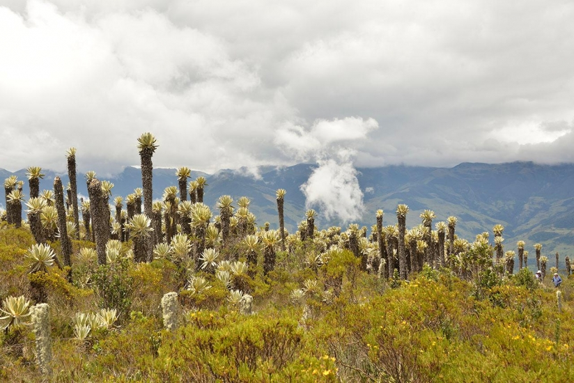Photo Paramos Ecological Restoration Project, Colombia, 2020