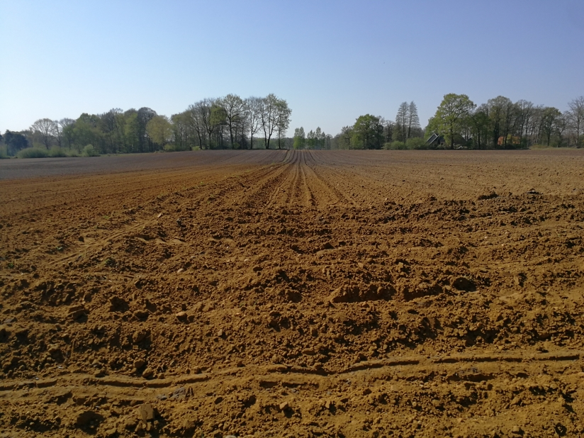 Arable land in the Netherlands