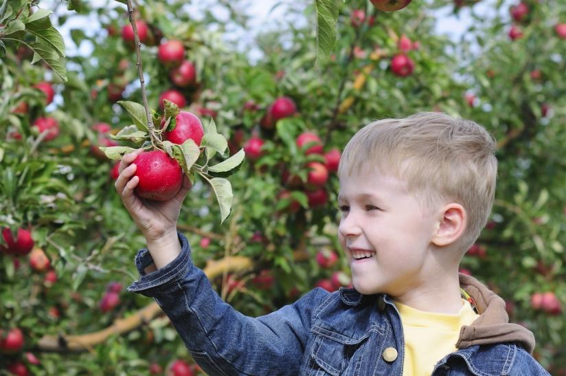 Foto van jongen die appel plukt