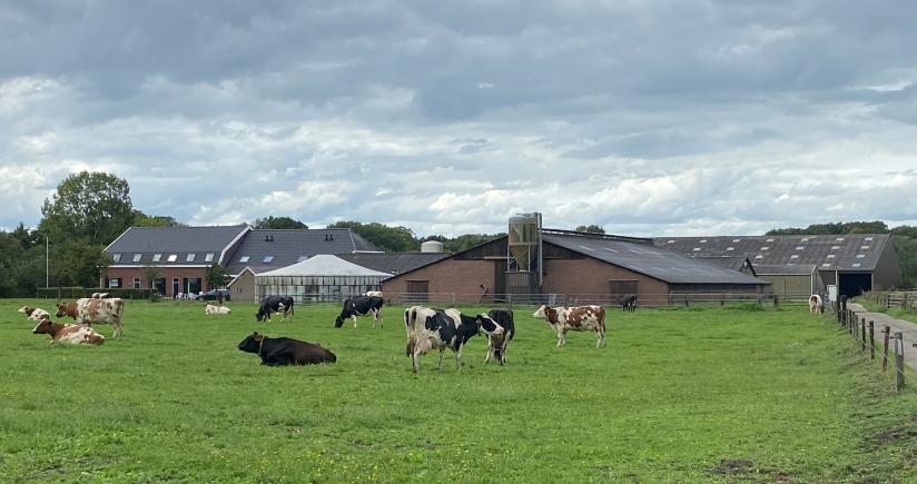 Foto Stal bij Bilthoven