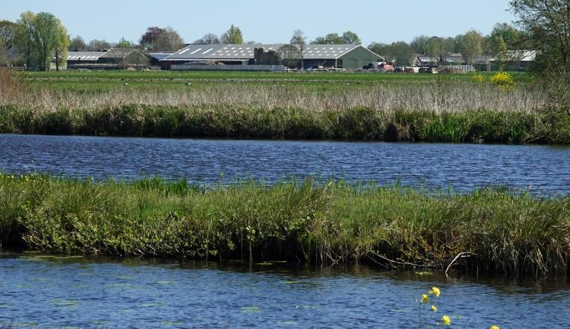 Een moderne veehouderij bij het Natura 2000-gebied Oostelijke Vechtplassen